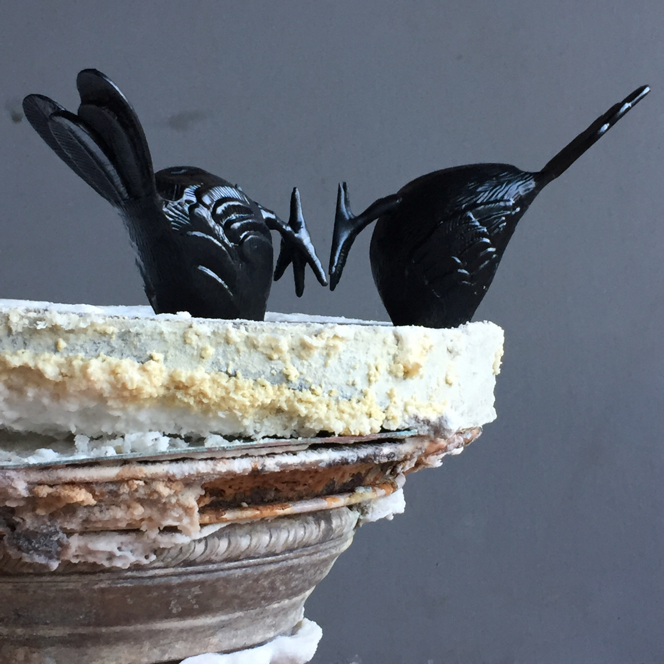 Detail image of two blackbirds facing head-first into a salt crust.